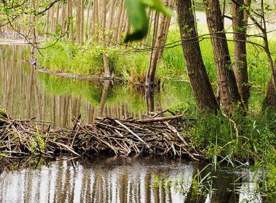 Naturpark Stechlin Ruppiner Land